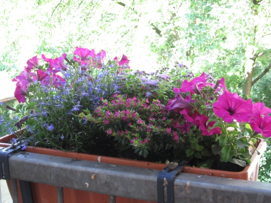 Sommerbunt: Blumen fürs Auge.