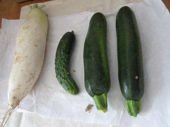 Radi, Mini-Gurke, 2 Zucchini (eine bereits verspeist: gut!)