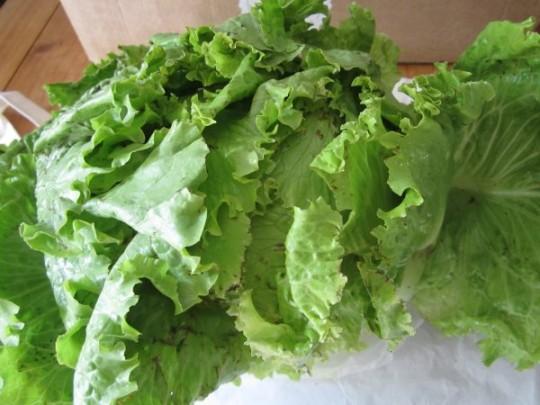 Salat. Gut.