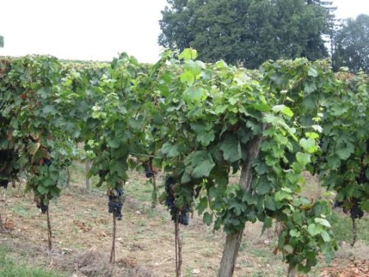 Im Herzen des Landes der Bordeaux-Weine