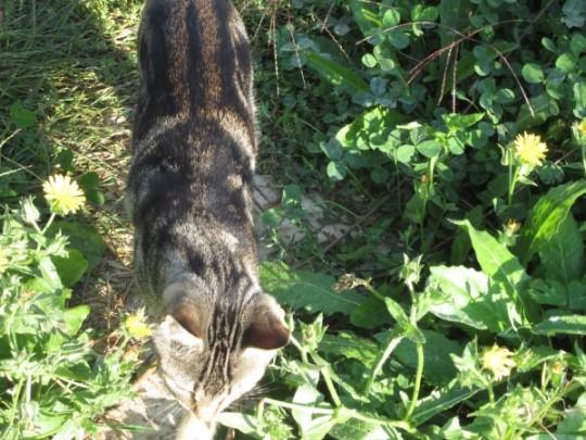 Die drei junge Katzentiere hatten es uns angetan - hier gestreifter Pirsch durchs Gelände