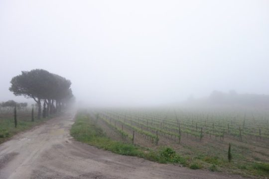 Weingut im Nebel, aber sehr guter Wein.